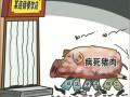 福建2千多吨病死猪肉流向餐桌